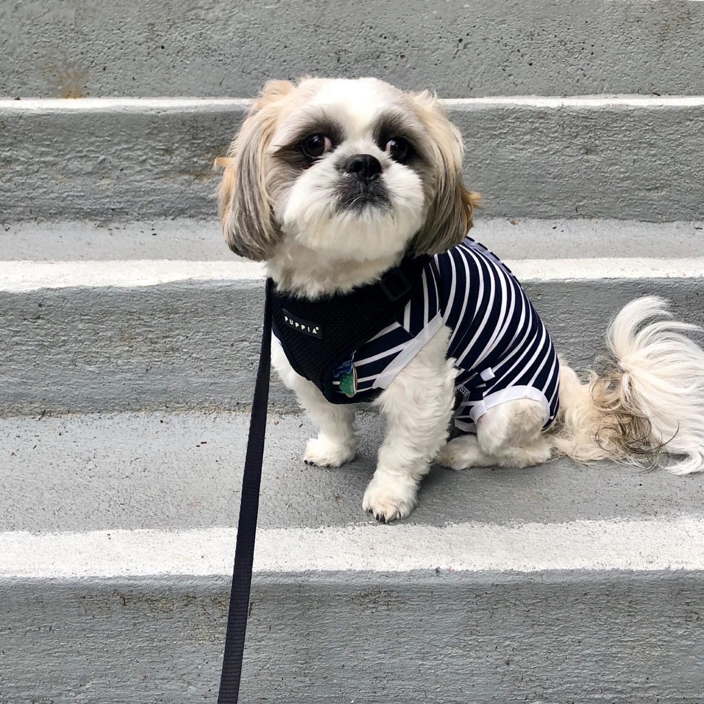 Striped Dog Suit