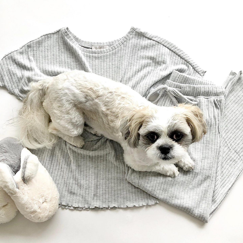 LOFT Ribbed Pajama Set, size XXS regular